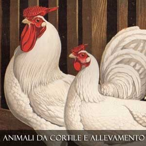 Animali di Cortile e Allevamento