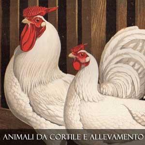 ANIMALI DA CORTILE E DI ALLEVAMENTO