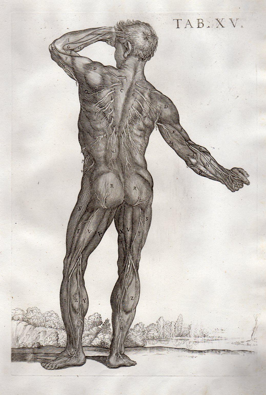 tavole anatomiche antiche