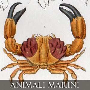 Animali Marini, Pesci, Conchiglie, Granchi